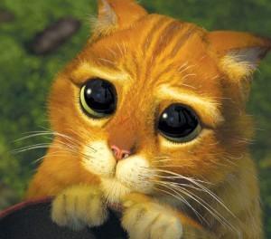 gato sherek