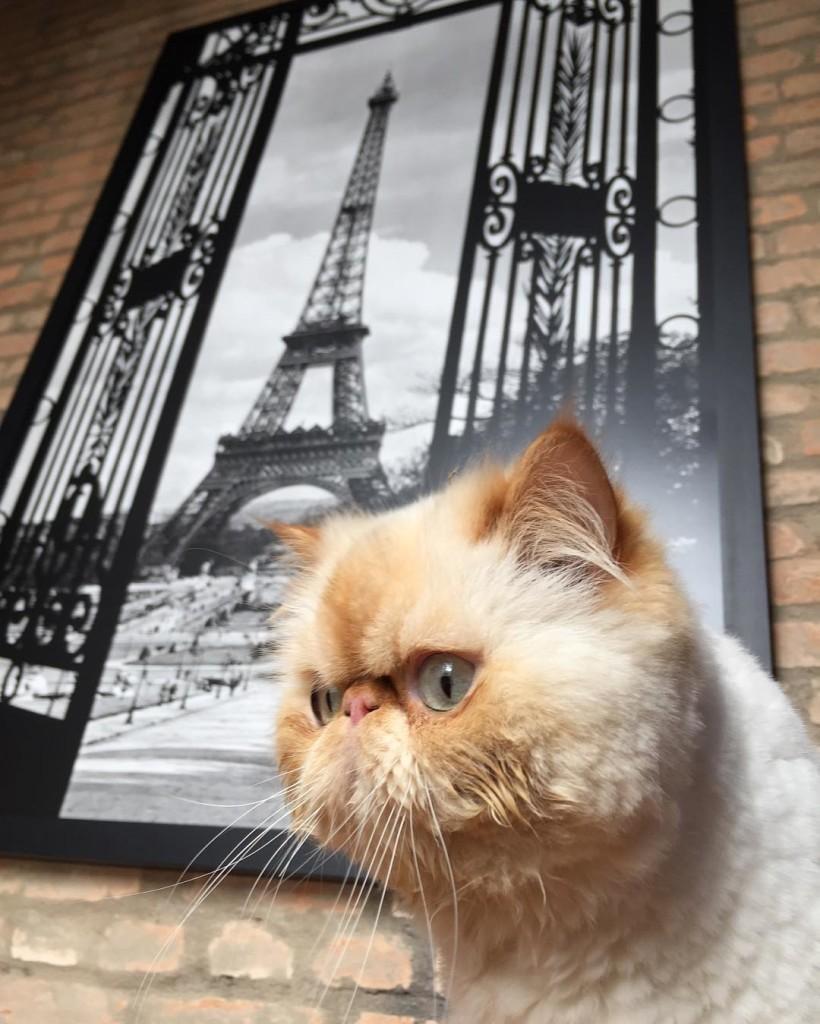 Quero viajar  Boris sqn