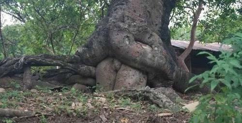 Caçadores de Sexo