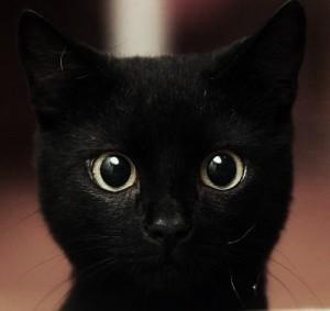 Você sente que tem um gato preto na alma?