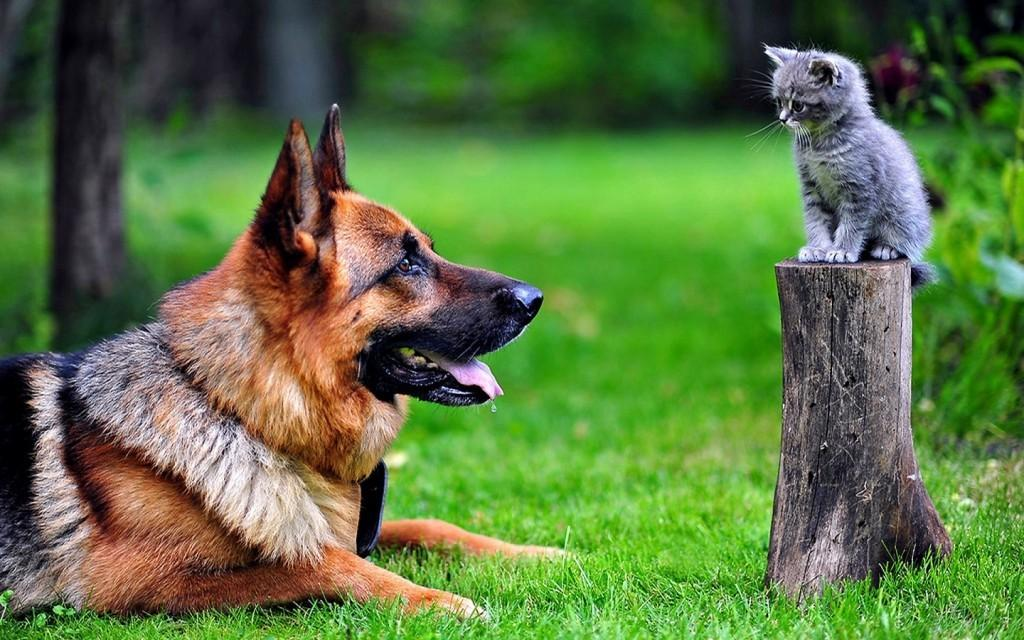 cachorro_e_gato