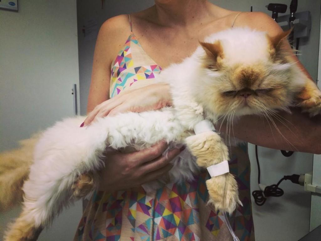 Boris tomando soro e antialrgico com olho inchado e ahellip